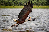 Fish Eagle Lake Naivasha