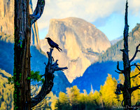 The Sentinel,  Raven, Yosemite, CA